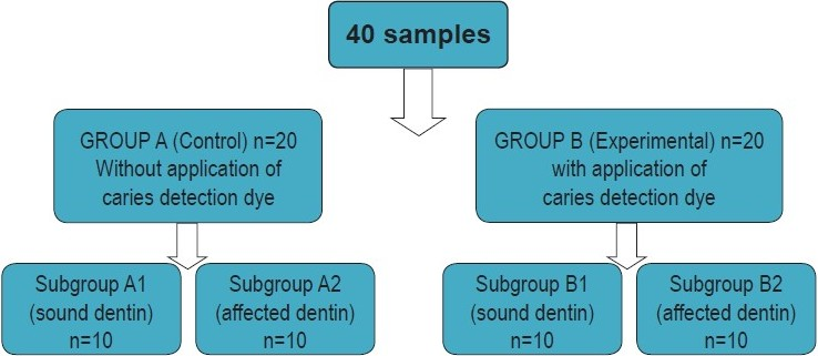 Figure 1: Flow chart showing distribution of samples into groups