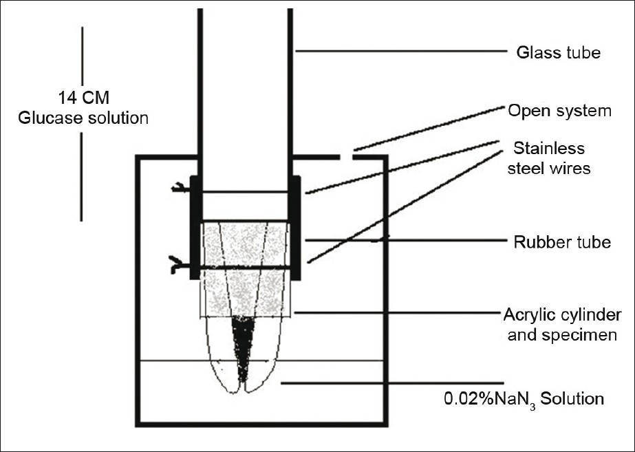 Figure 2: Schematic drawing of the glucose penetration set up used to measure the sealing ability of the root canal materials